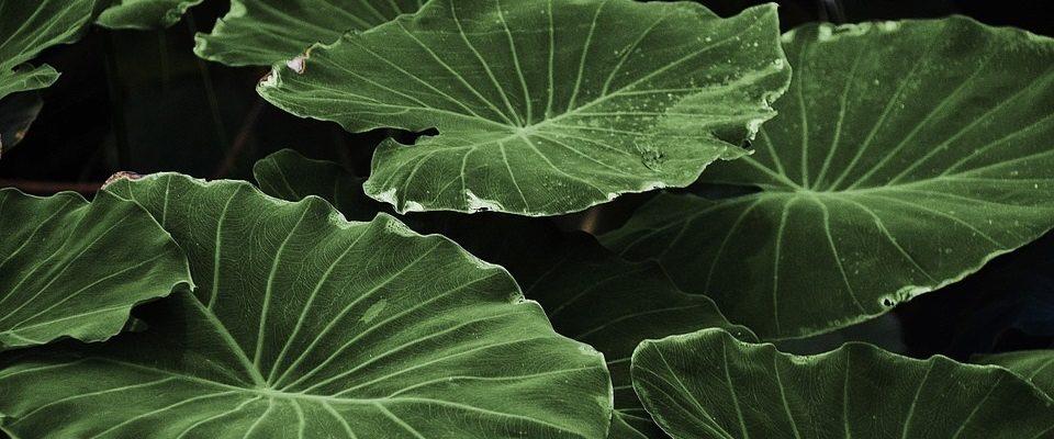 Gesundheitliche Vorteile von Pflanzen für Menschen